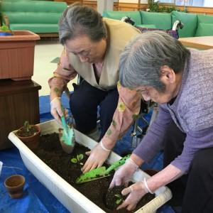 3特 園芸クラブ 野菜 004