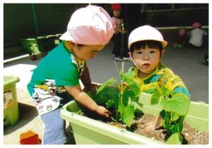 夏野菜苗植え